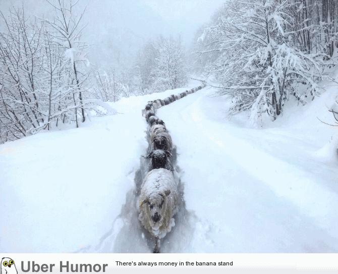 Cute Snow Quotes Meme Image 20
