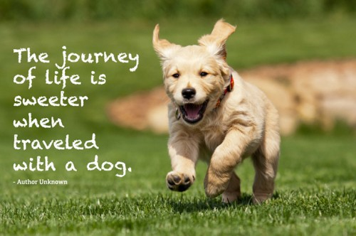 Dog Quotes Pinterest Meme Image 06