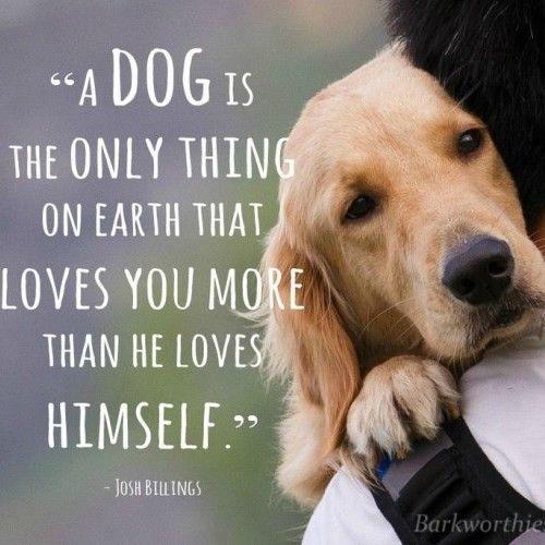 Dog Quotes Pinterest Meme Image 07