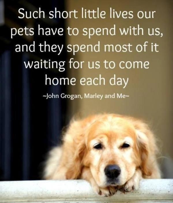 Dog Quotes Pinterest Meme Image 09