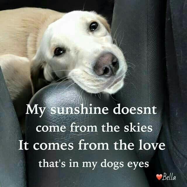 Dog Quotes Pinterest Meme Image 10