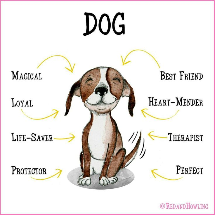 Famous Rescue Dog Names