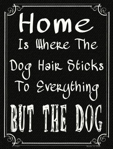 Dog Quotes Pinterest Meme Image 12