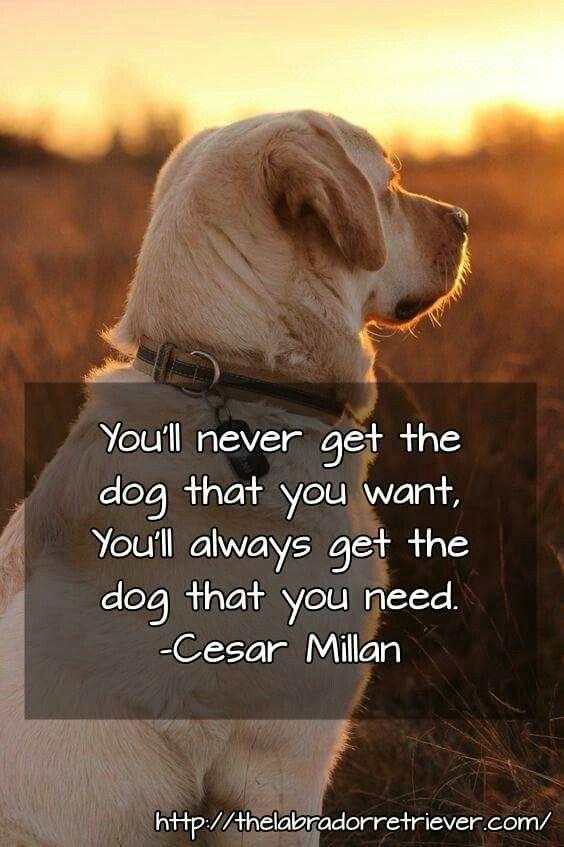 Dog Quotes Pinterest Meme Image 13