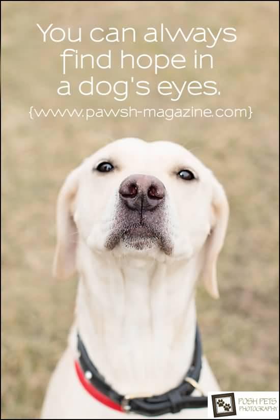 Dog Quotes Pinterest Meme Image 18