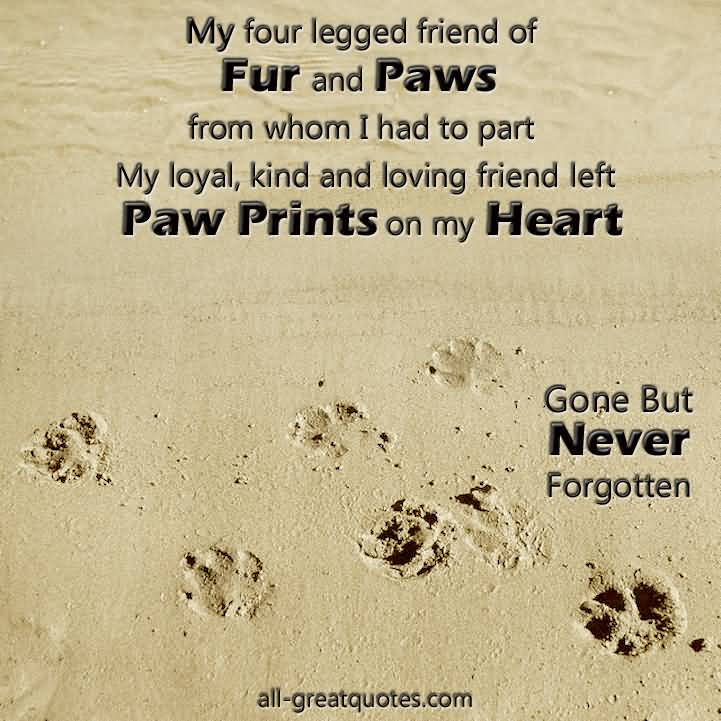 Grieving Pet Loss Quotes Meme Image 19