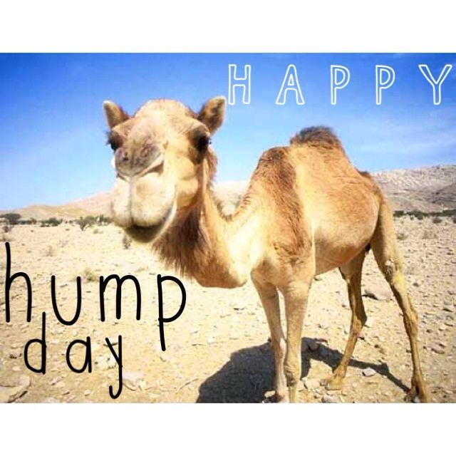Happy Hump Day Meme Funny : Happy hump day meme image quotesbae