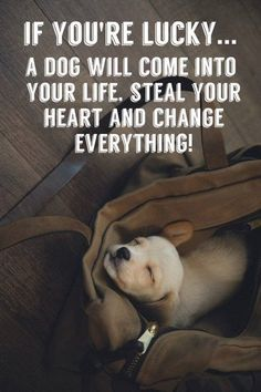 Puppy Love Quotes Meme Image 03