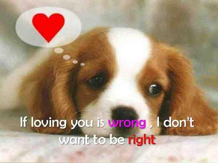 Puppy Love Quotes Meme Image 08