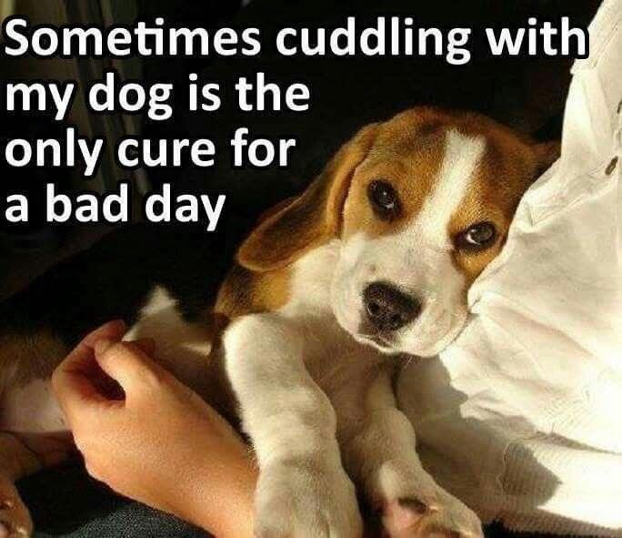Puppy Love Quotes Meme Image 12