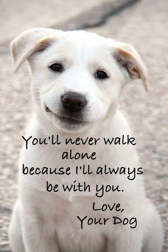 Puppy Love Quotes Meme Image 13