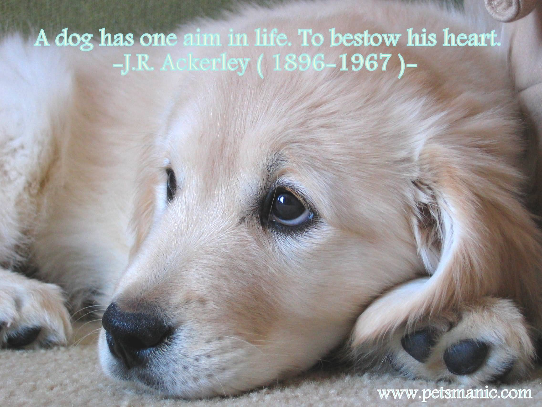 Puppy Love Quotes Meme Image 20