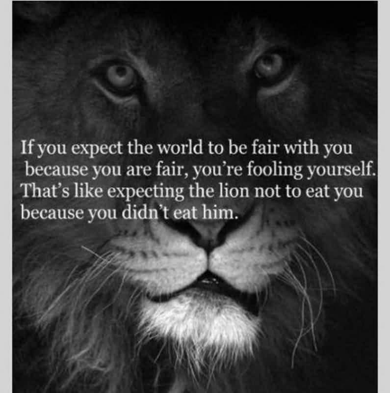Quotes About Lions Meme Image 10