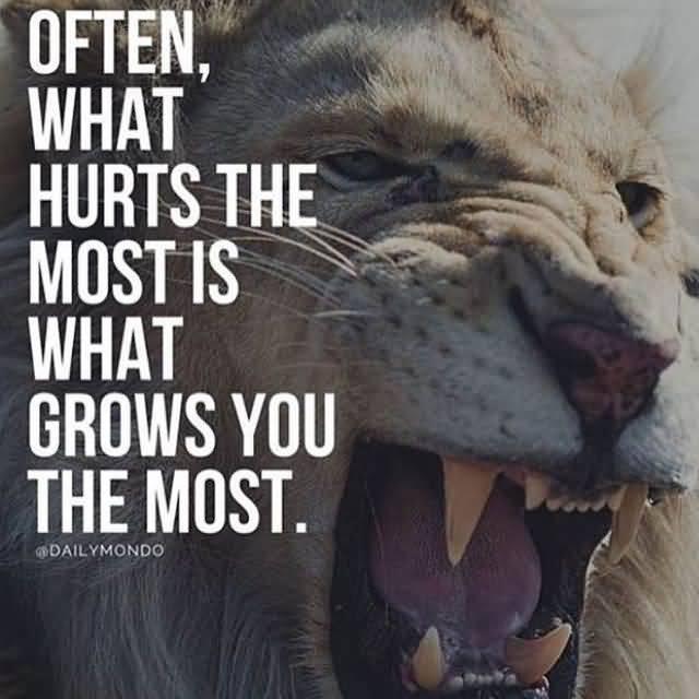 Quotes About Lions Meme Image 12