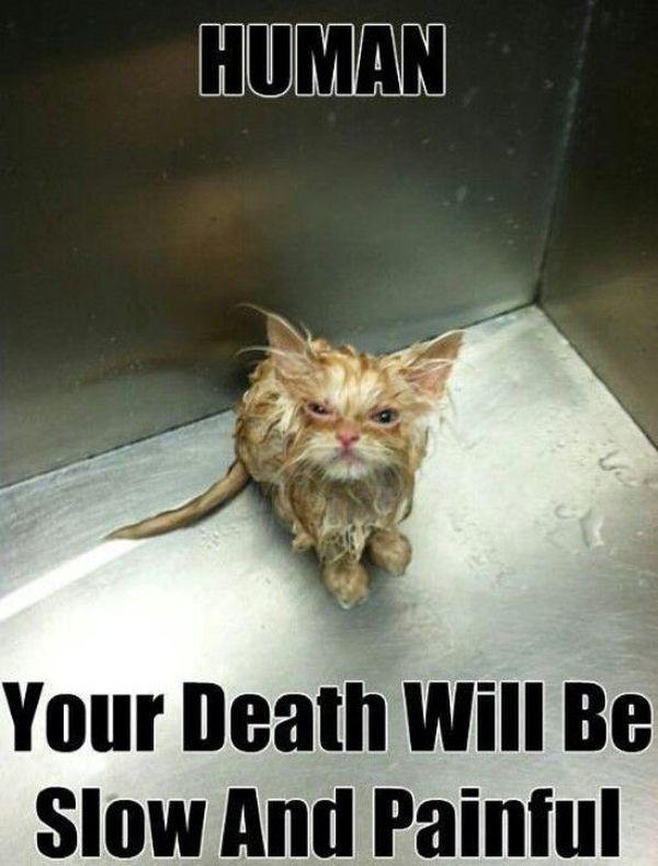 Clean Cat Memes Images