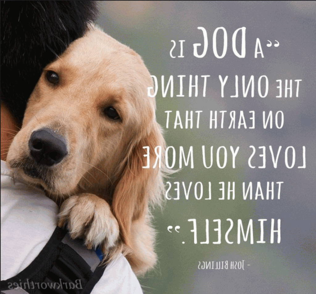 A Dog S Love Is Unconditional
