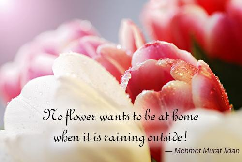 Flower And Love Quotes 02