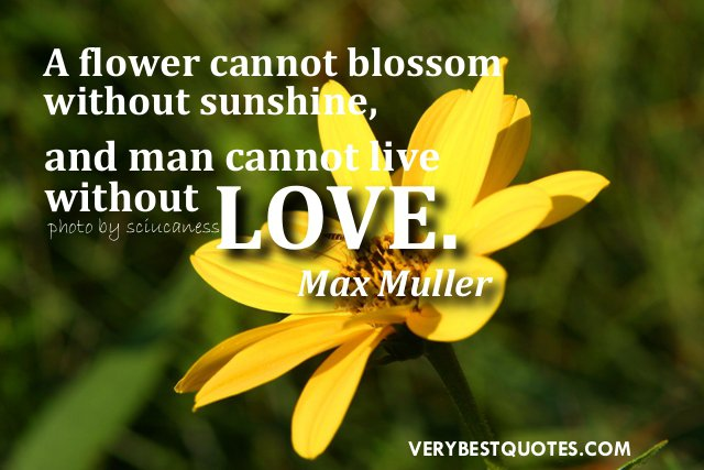 Flower And Love Quotes 15