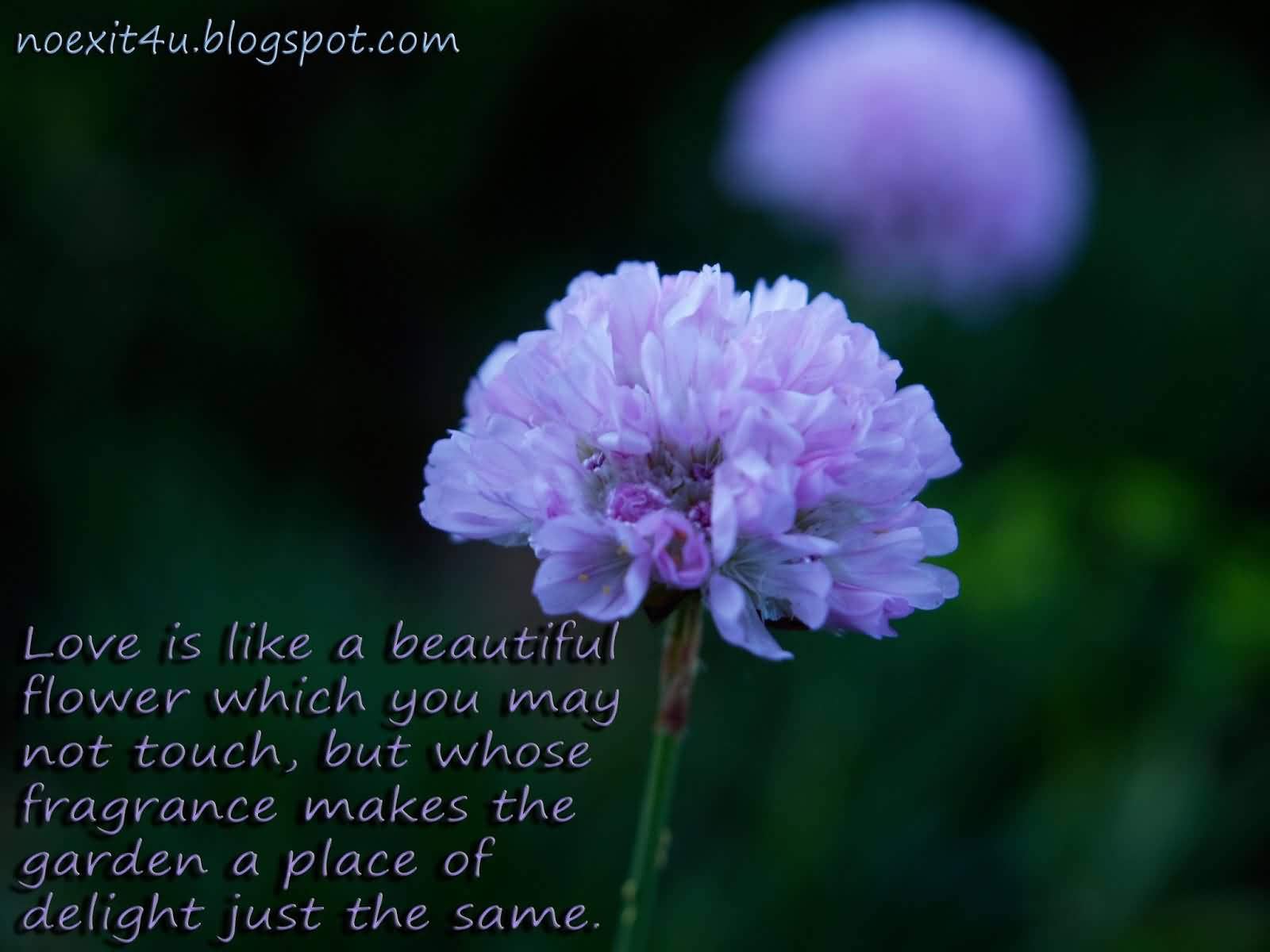Flower And Love Quotes 18