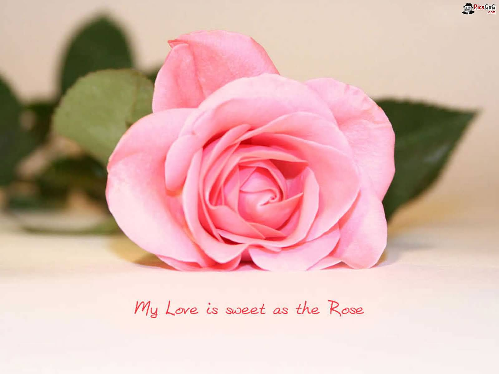 Flowers Love Quotes 15