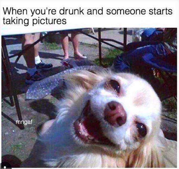 Funny Alcohol memes photo