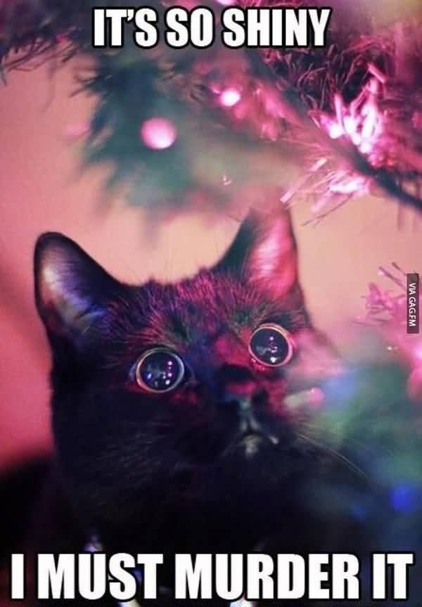 Funny Black Cat Memes Joke