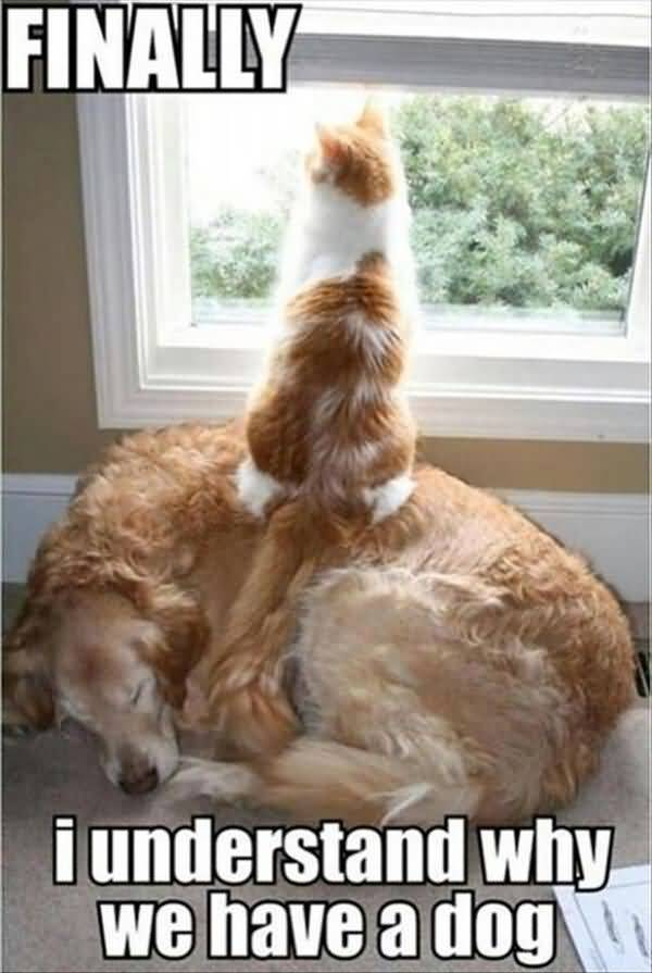 Funny Dog and Cat Memes Picture