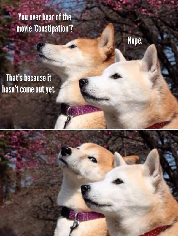Funny Doge Jokes Image