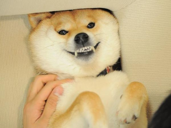Funny Doge Pictures Meme