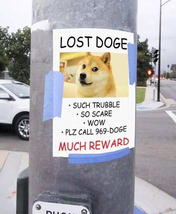 Funny Lost Doge Meme Image
