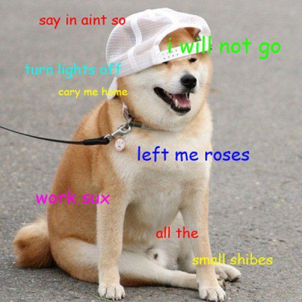 Funny Shiba Inu Meme Picture