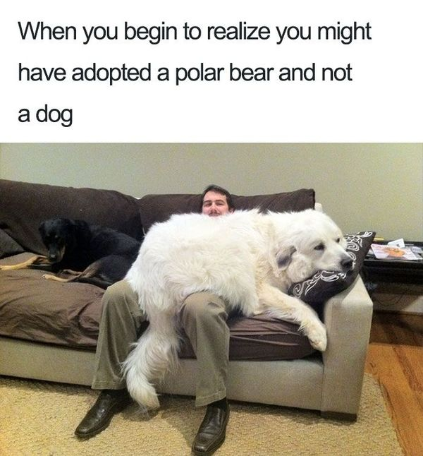 Funny adorable dog memes image