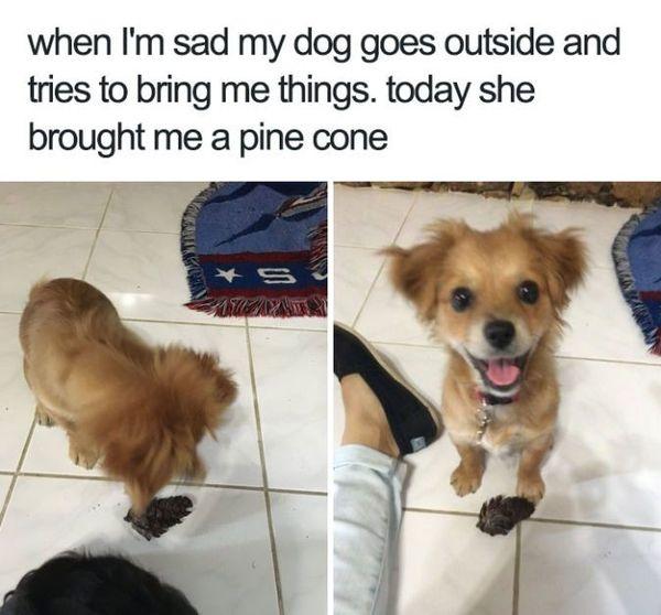 Funny adorable dog memes joke