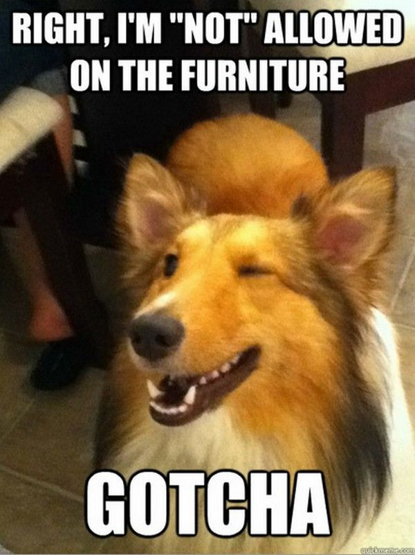 Funny adorable dog memes picture
