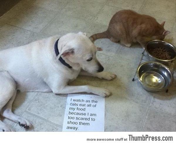 Funny bad dog memes joke