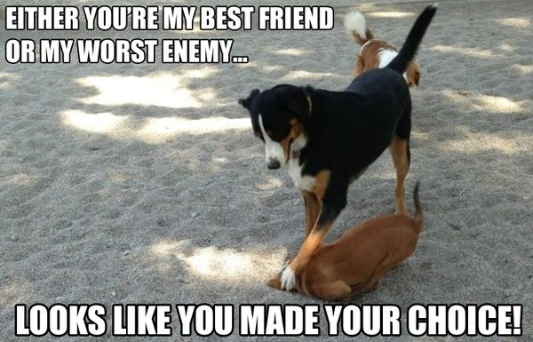 Funny bad dog memes picture