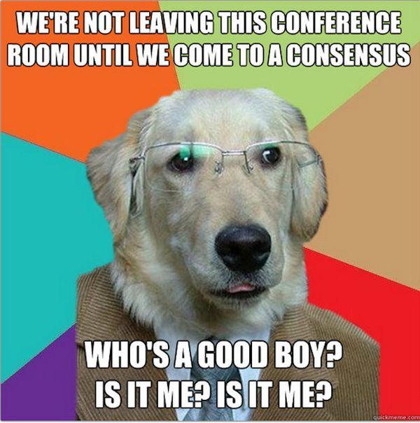 Funny best dog memes joke
