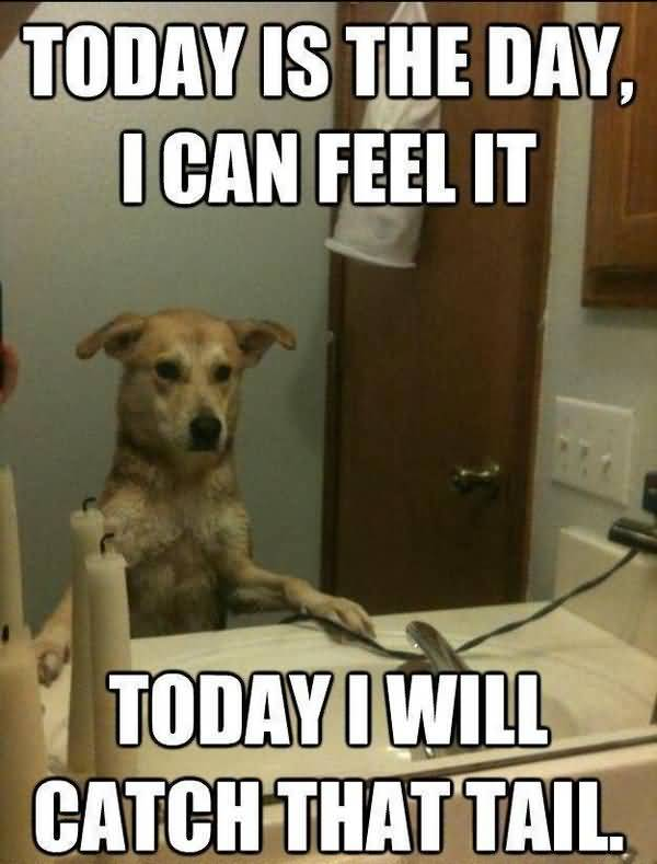 Funny best dog memes picture