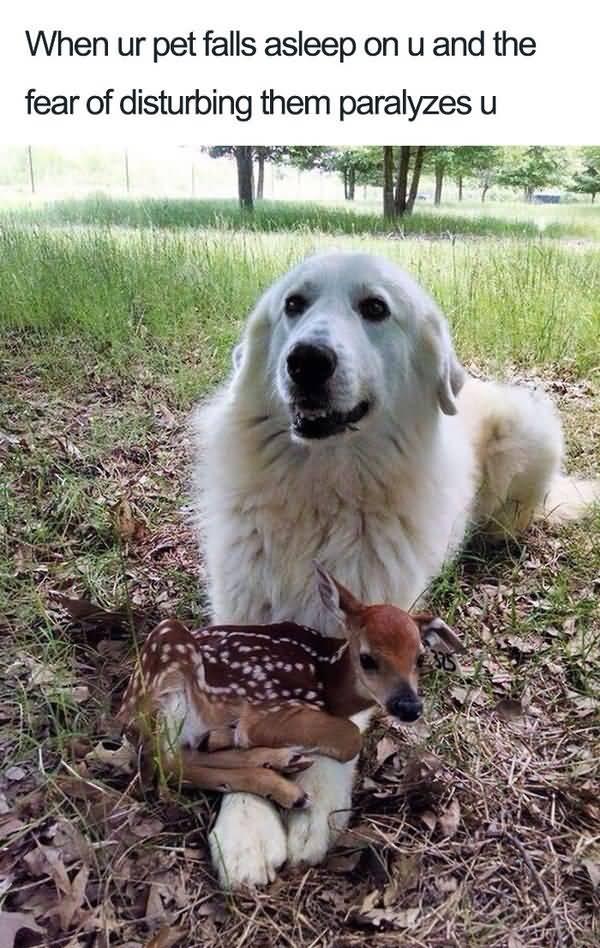 Funny cute dog memes joke