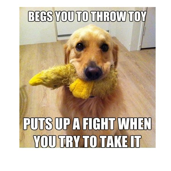 Funny cute dog memes picture