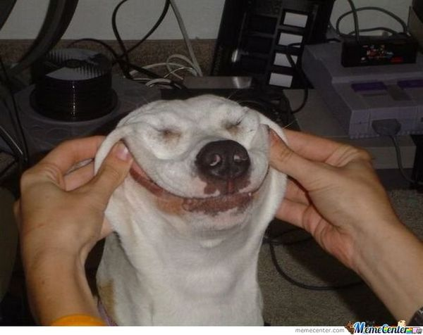 Funny dog face meme 4