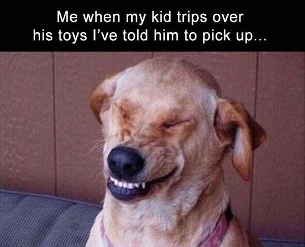 Funny dog laughing meme image