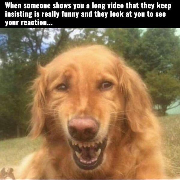 Funny dog laughing meme joke