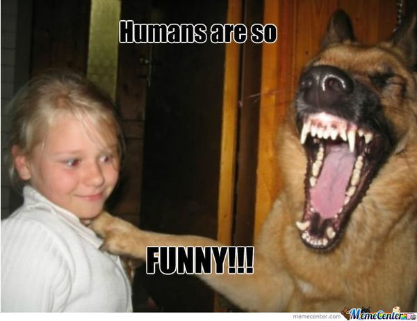 Funny dog laughing meme pictures