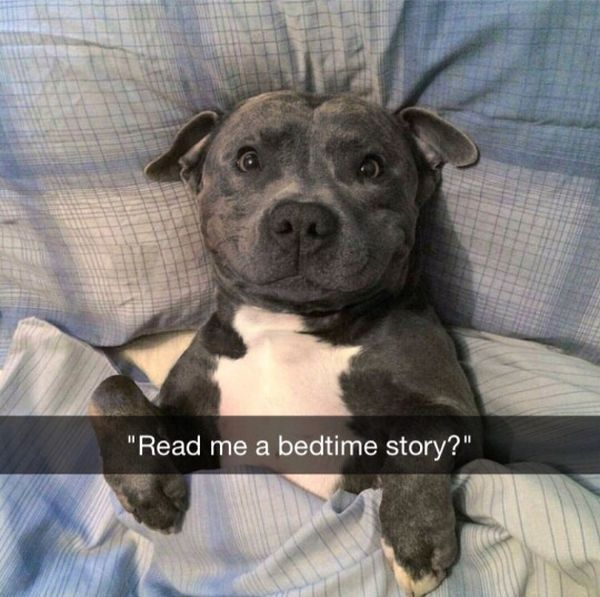 Funny happy dog meme picture