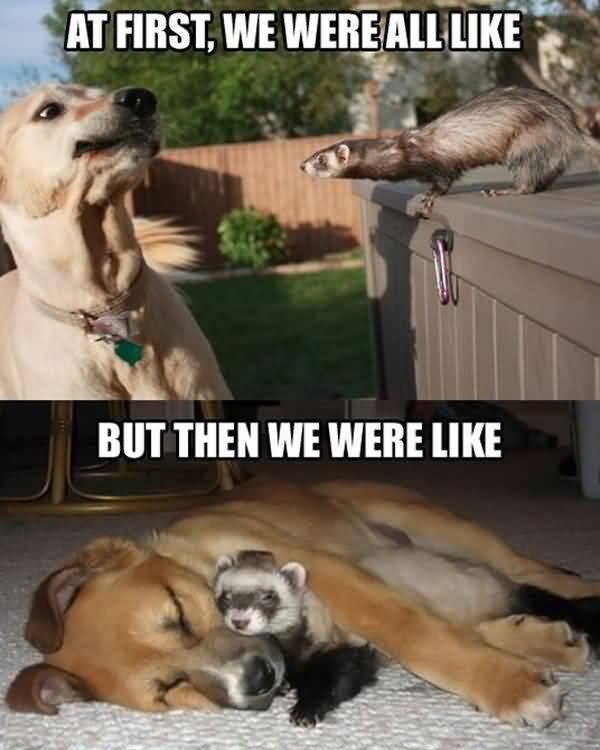 Funny hilarious dog memes image