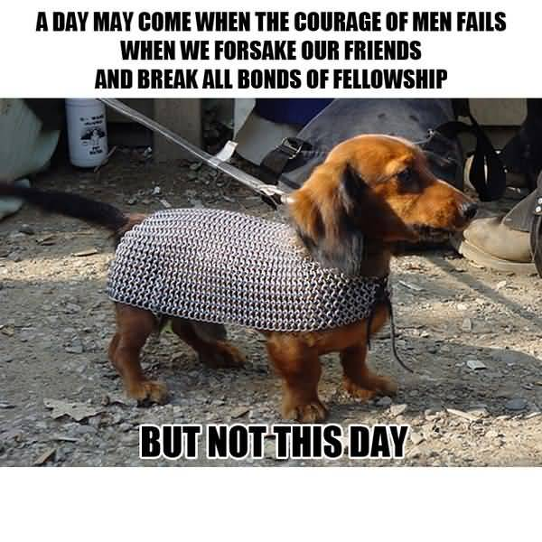 Funny hilarious dog memes pictures