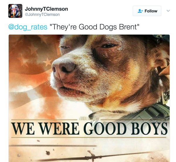 Funny new good dog meme picture