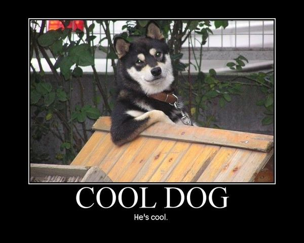 Funny new good dog meme pictures
