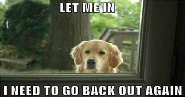 Funny pet memes 2017 image
